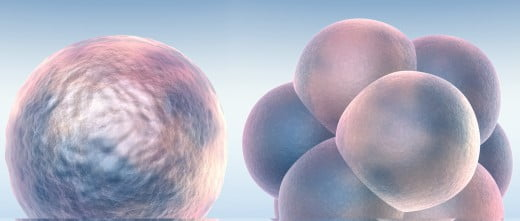 Embriones que se pueden transferiri