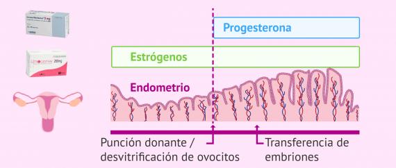 Medicación preparación endometrio