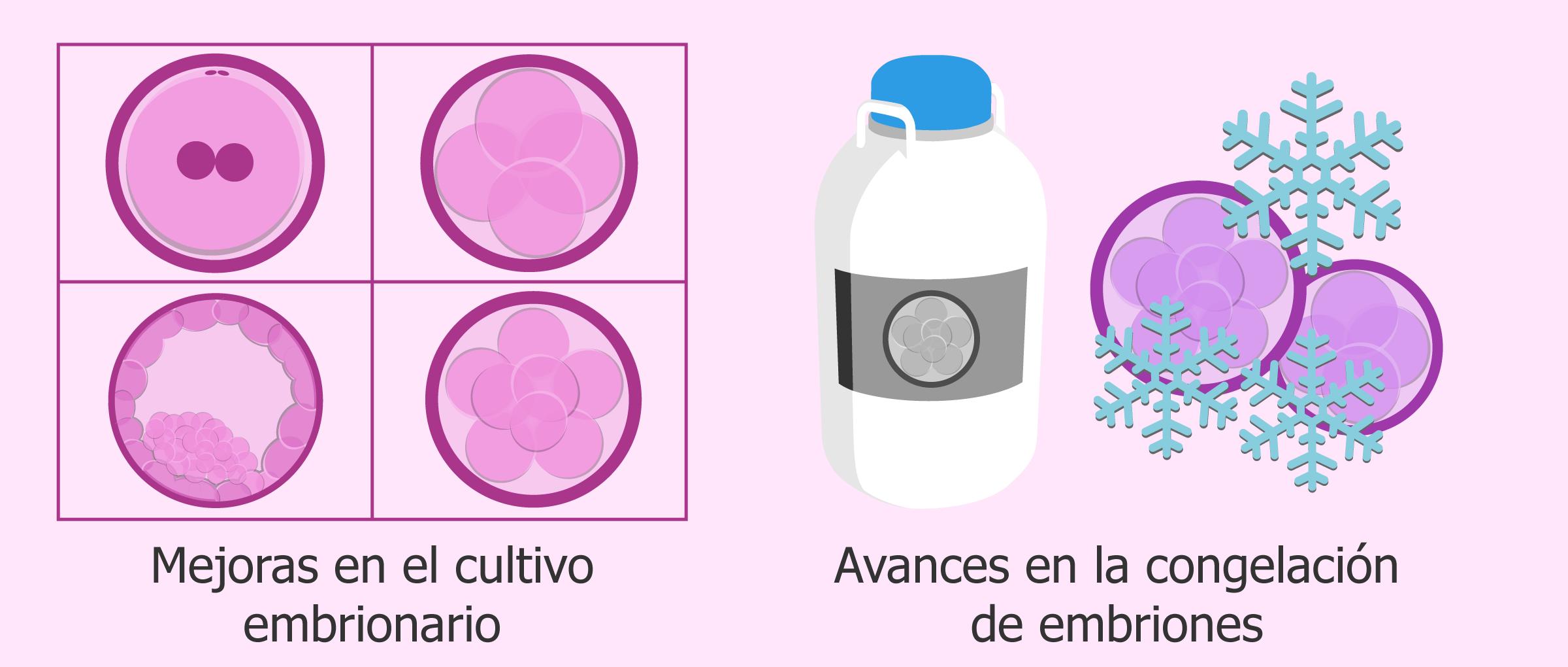 Cultivo embrionario y vitrificación